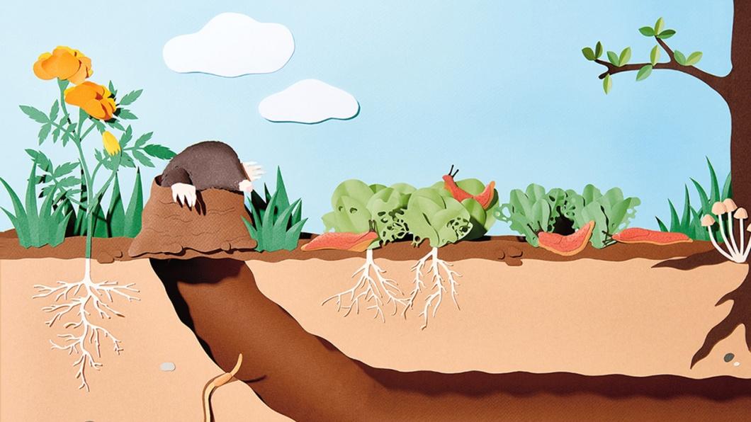 Illustration von Damoun Tamir und Andrea Weber/WRK zum Thema Ungeziefer im Garten