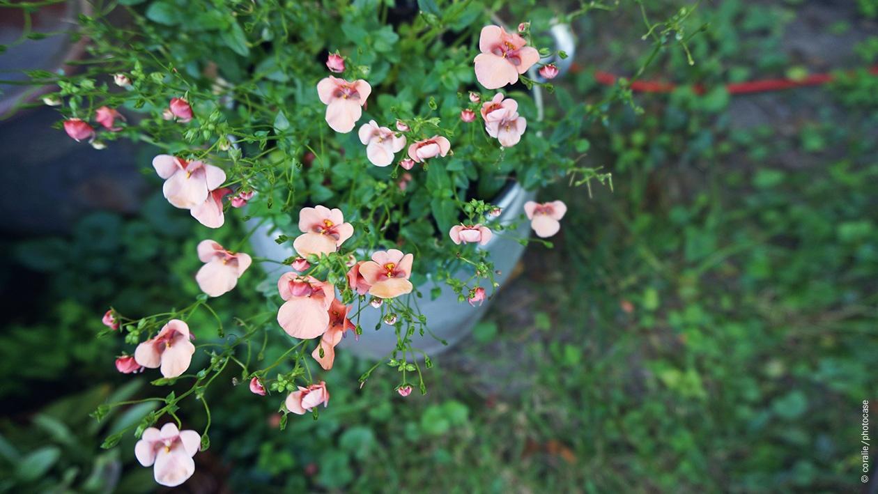 Blumen in Pflanzkübel