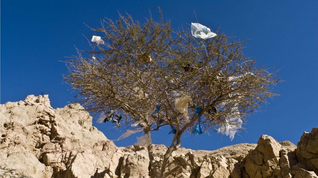 Plastiktüten hängen in einem Baum in Ägypten, Afrika