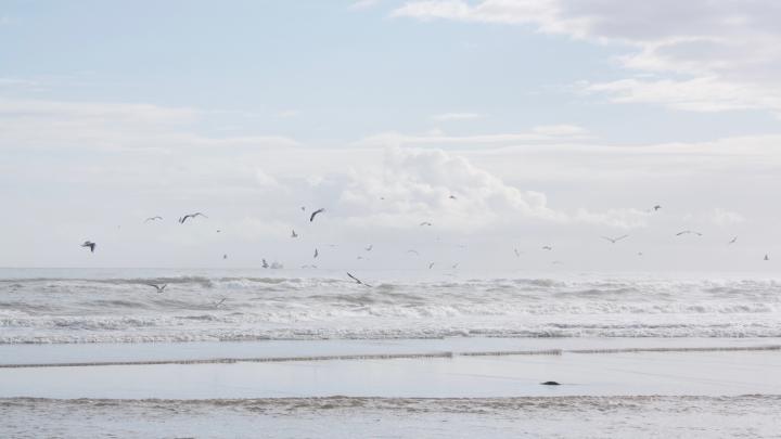 Möwen über dem Meer