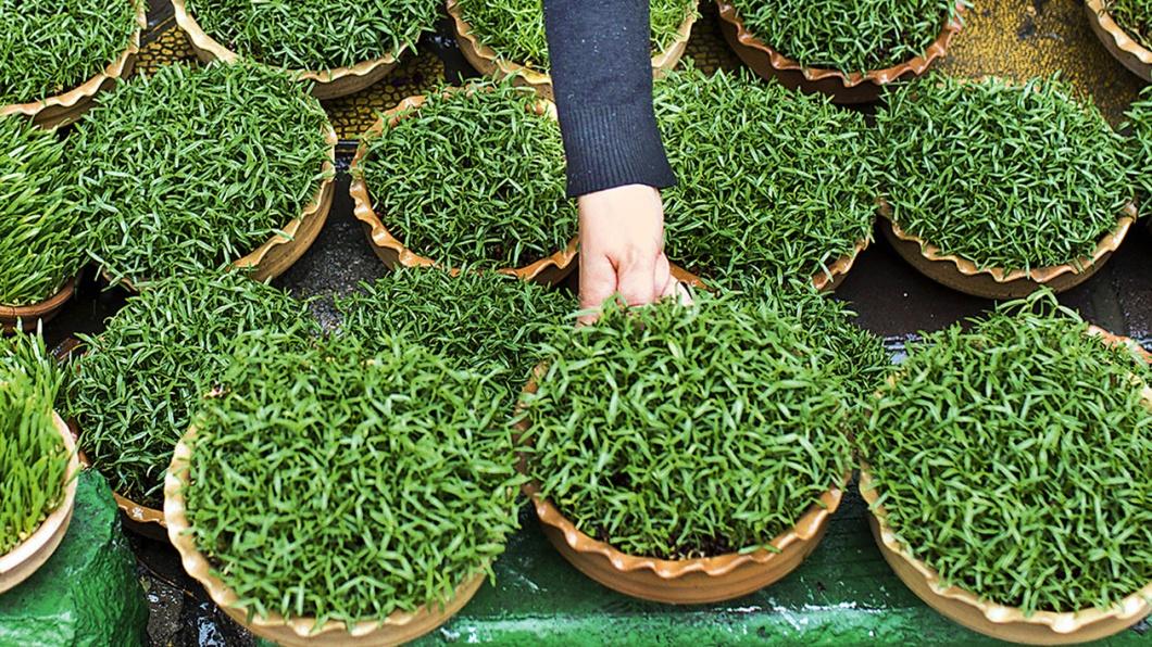 Eine Iranerin kauft grüne Sprossen für das Neujahrs- und Frühlingsfest.
