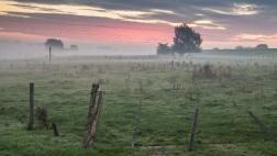 Wiese im Morgengrauen