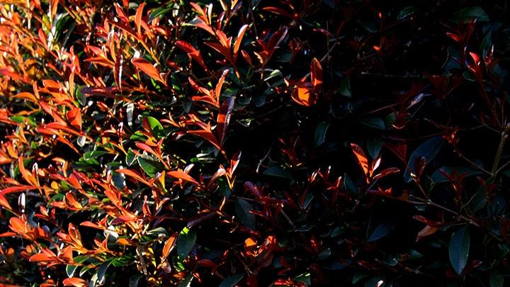 Spätsommerliche, herbstliche Natur - Wechselspiel von Hell und Dunkel, Farbenpracht und Schwärze