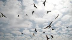 Himmelsvögel
