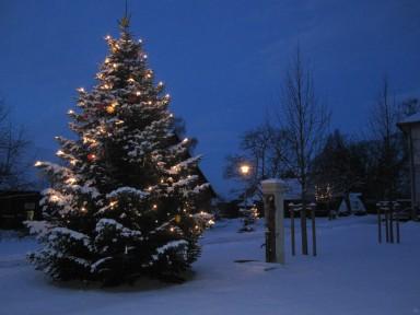 Weihnachtsbaum vor der Abtei