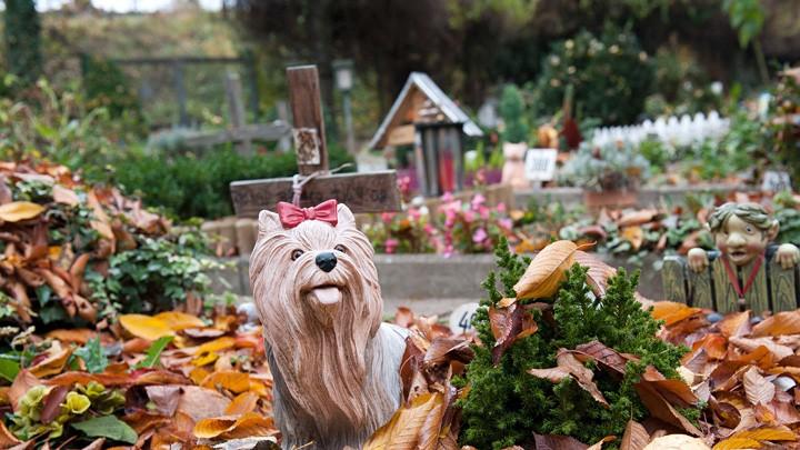 Tiergräber auf dem Mainzer Tierfriedhof.