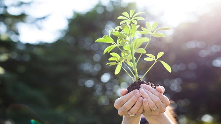 Pflanze-Umweltschutz