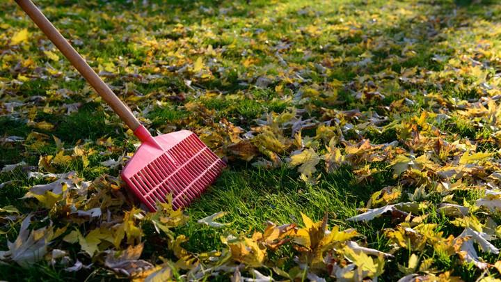 Ein Stück freie Rasenfläche umgeben von Laub.