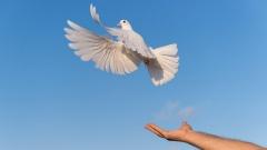 Ausgestreckter Arm und ein weiße Taube vor blauem Himmel.