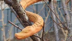 Schlange im Baum des Bibelgartens in Marzahn Nord.