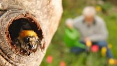 Totes Holz kann mehr Leben in den Garten bringen