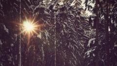 Sonnenstrahlen scheinen durch schneebedeckte Tannen.