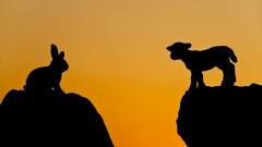 Hase und Lamm stehen einander gegenüber