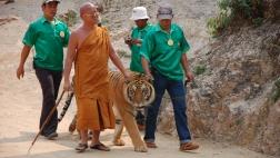 Abt und drei weitere Männer führen einen Tiger