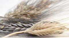 Die Saatgut-Retter