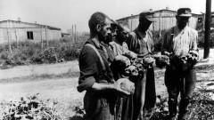 Konzentrationslagers Majdanek