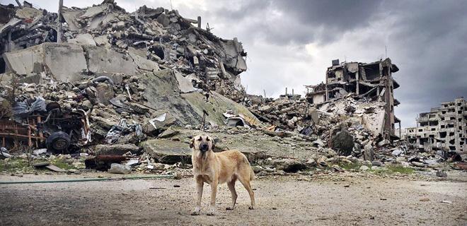Hund vor Trümmern in Homs