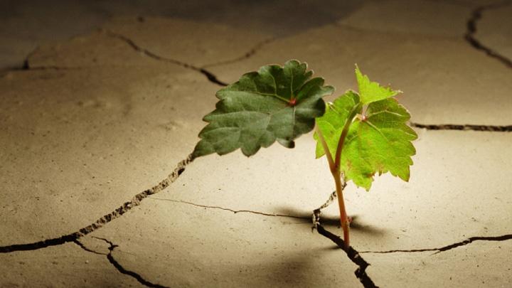 Eine kleine Pflanze wächst auf vertrockneter Erde.