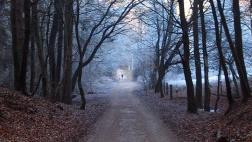 Foto zeigt Weg durch einen winterlichen Wald, an dessen Ende unscharf die Silhouette eines Menschen auszumachen ist.