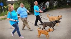 Das dreiköpfige Mainzer Hundetraum-Team Jaqueline Kessler, Peter Fritz und Rolf Scherf (v.li.) geht mit drei Hunden Gassi.