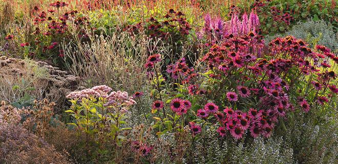 Heimische Pflanzen Für Den Garten pflanzen und insekten im garten helfen chrismon