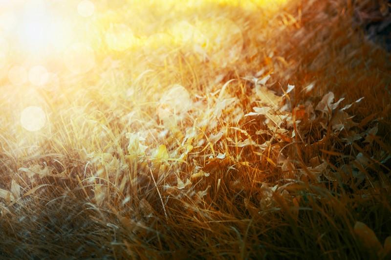 Morgensonne im Herbst über einer Wiese.