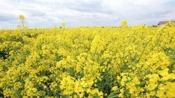 Einsatz von Stickstoff und Phosphor in der Landwirtschaft.
