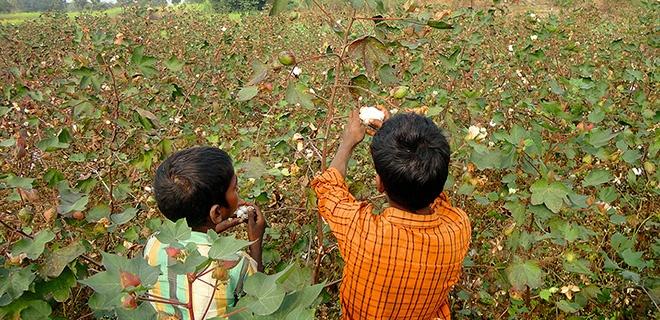 Arbeit im Baumwollfeld