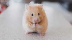 Hamsterkäufe